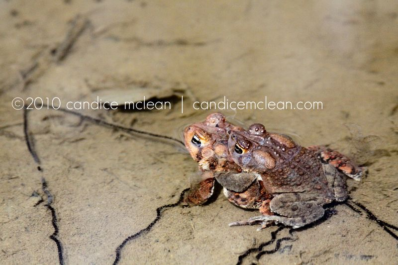 Cem_frog_1