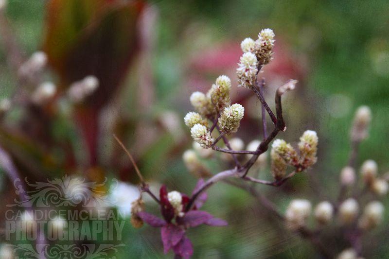 Floral_1