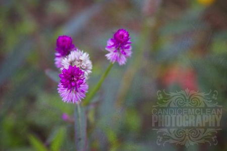 Florals_4