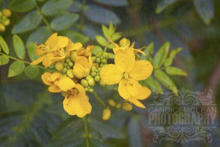 Florals_3