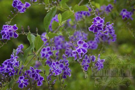 Florals_5