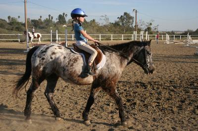 Roan_horse_1